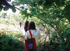 Listeners walking bush